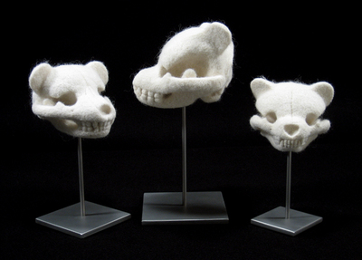 Lined_up_trio_of_hosfelt_skulls
